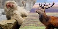 サルとシカの異種間交尾が話題に!【衝撃】実際にいるハイブリッド動物たち