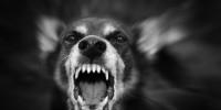 【注意】最悪の場合死も。愛犬が我が子に噛みついてしまう理由