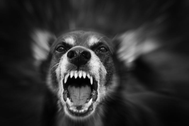 飼い犬 に 噛ま れ 死亡