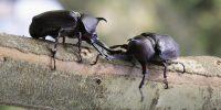 「虫好きおとな」増殖中。春に探したい奇妙、珍妙、不思議な虫たち