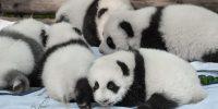 パンダの名前が決定!大人絵本マニアが絶賛する「大人向けパンダ絵本」
