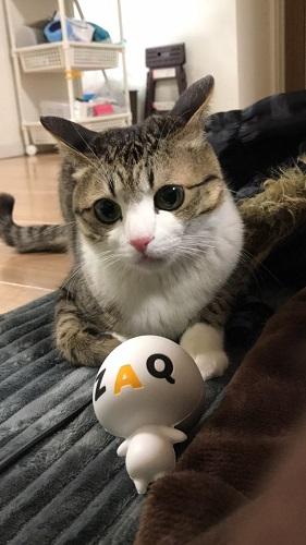 なかでも注目なのが、2017年末の時点でインスタグラムのフォロワー数が約50万人になった、有名芸能人顔負けの人気を誇る猫界のスーパースター「すずめ ちゃん」です。