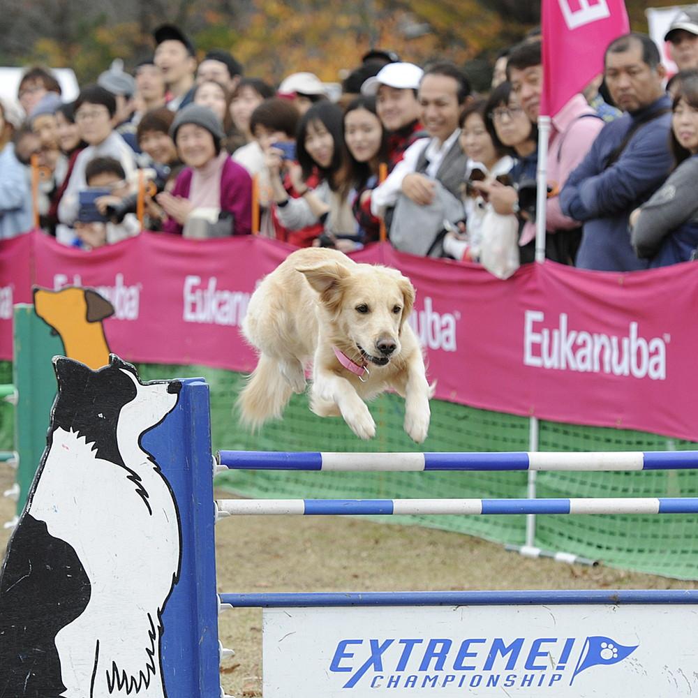 犬たちが宙を舞う!ドッグスポーツ全国決勝大会の写真を一挙紹介